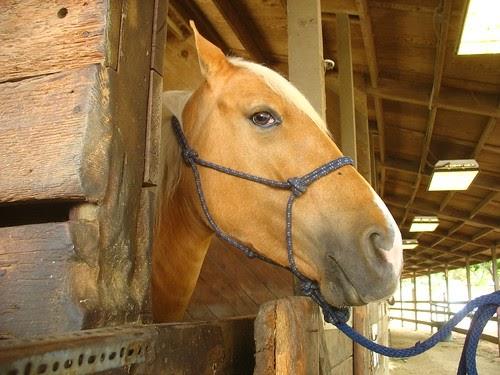 My Back 40 Feet Chabot Equestrian Center