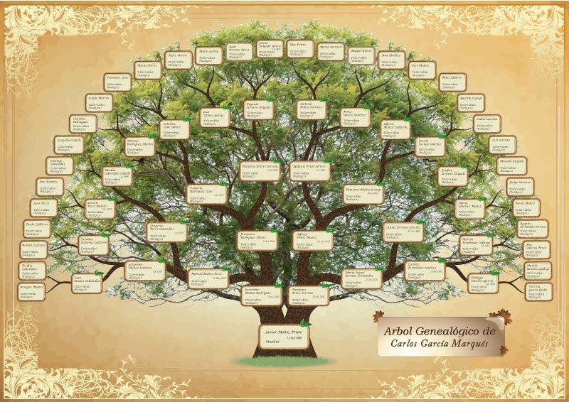 árbol Genealógico 2 Estudios Genealógicos Investigación