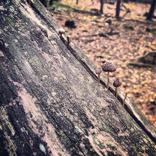 Petit mushrooms by la casa a pois