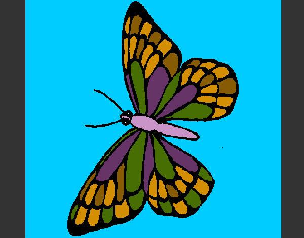 Dibujo De Mariposa Colores Bonitos Pintado Por Franche En Dibujos