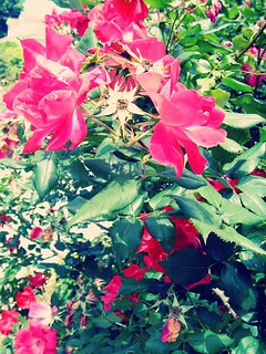 Frelinghuysen Arboretum Garden 3