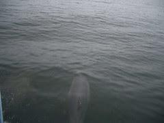 Dolphin!!!