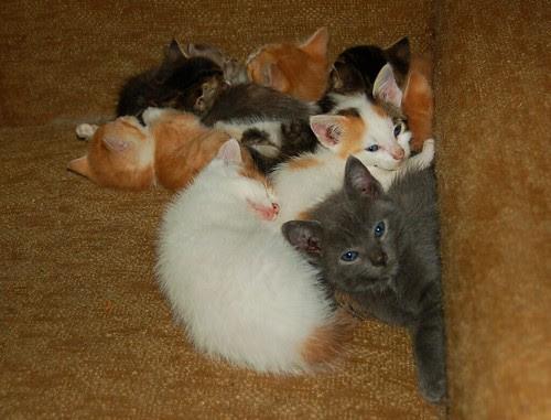 Kitten pileup