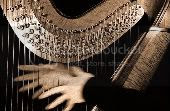 Harp Pictures, Images and Photos