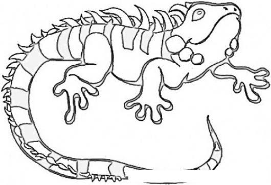Dibujo De Una Iguana Para Pintar Y Colorear Colorear Dibujos