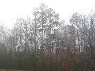 http://upload.wikimedia.org/wikipedia/commons/thumb/6/62/Trees_in_fog.jpg/320px-Trees_in_fog.jpg?uselang=nl