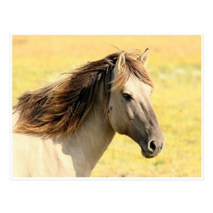 Cream Colored Horse Against Yellow Grass Postcard
