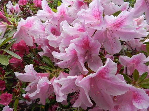 todayflowersDSCN6545