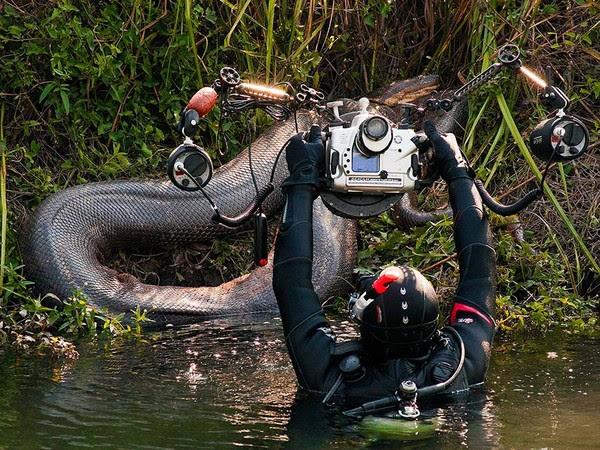 Sucuri foi fotografada até sair do rio Formoso, em Bonito (Foto: Daniel De Granville / Photo in Natura)