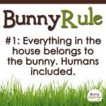 Bunny Rule 1
