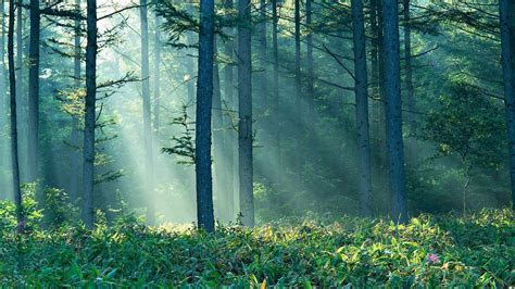 Enchanted Forest Wallpapers HD   wallpaper.wiki