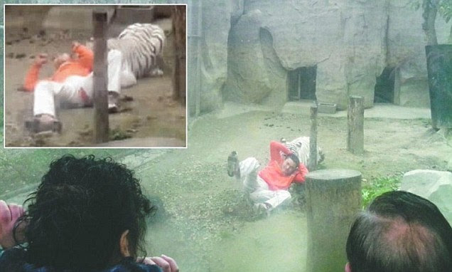 Horrific moment Chinese man gets mauled by white tiger after jumping into enclosure and trying to feed it a bag of rice