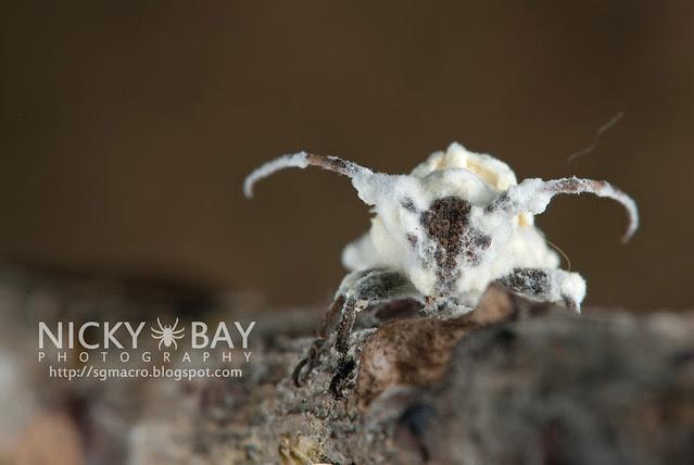 Longhorn Beetle (Cerambycidae) - DSC_5524