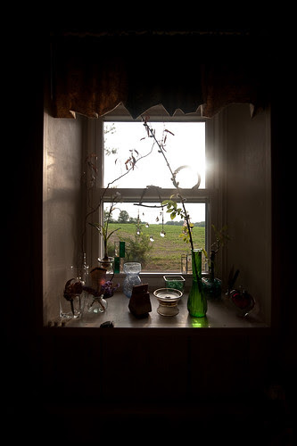 Amy's Kitchen Window.