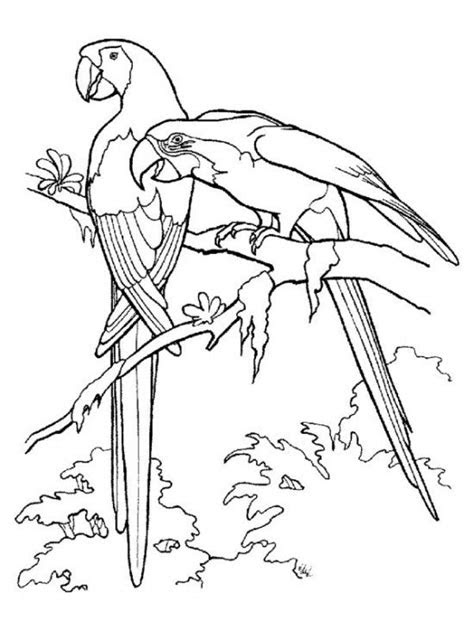 printable rainforest animal coloring pages kids