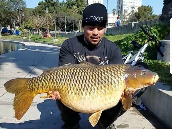 Image result for Man Catches 50-Pound Carp in LA Lake