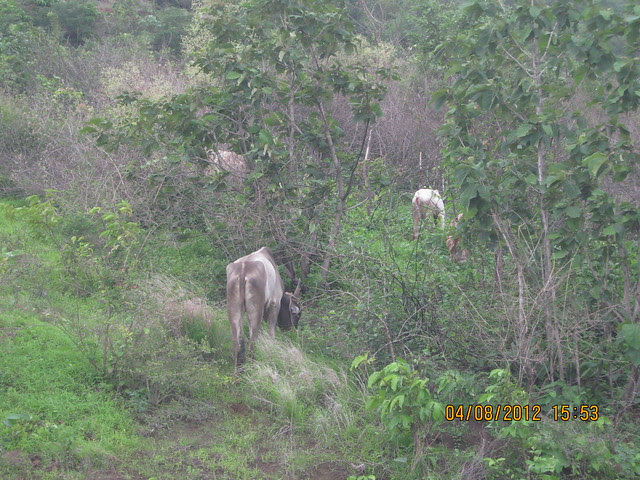 Visit Xrbia - Nere Dattawadi, on Marunji Road, approx 7 kms from KPIT Cummins at Hinjewadi IT Park - 156