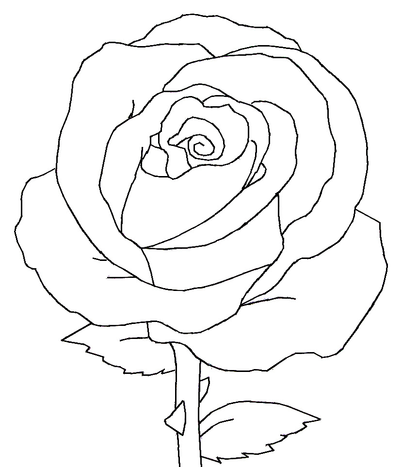 Single black picture free rose Black Rose