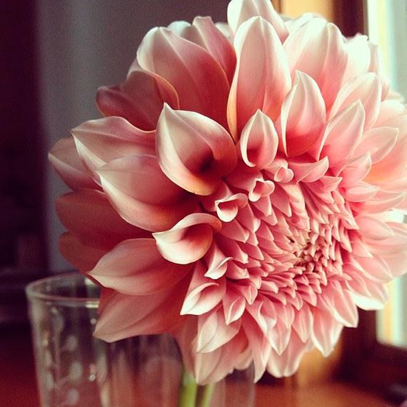 instagram florists ariellachezardesign 0814_sq