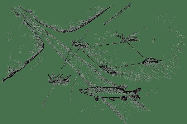 Схема щучьего маршрута в начале и конце зимы