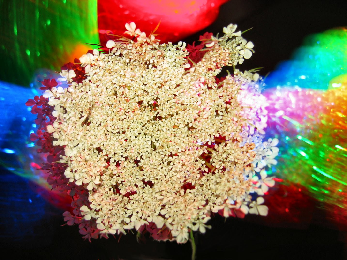 Queen Anne's Lace Flower LED Photo Art for the new Soul Amp Tune