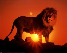 1180Lion-at-Sunset-Posters