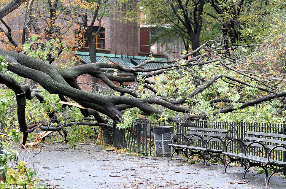 Timber: Superstorm Sandy caused a fallen tree to crash down near park benches in Manhattan's Upper West Side