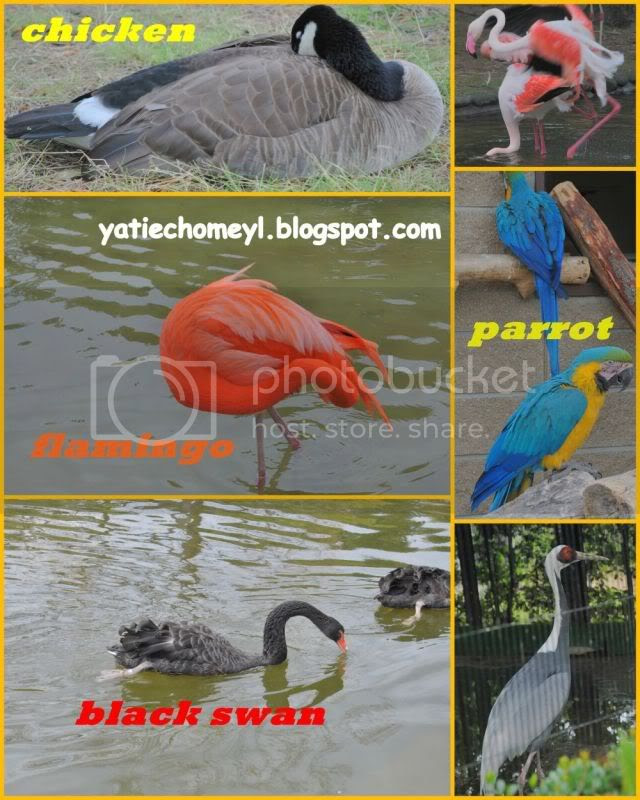 http://i122.photobucket.com/albums/o262/dasar_chomeyl/Desktop3.jpg