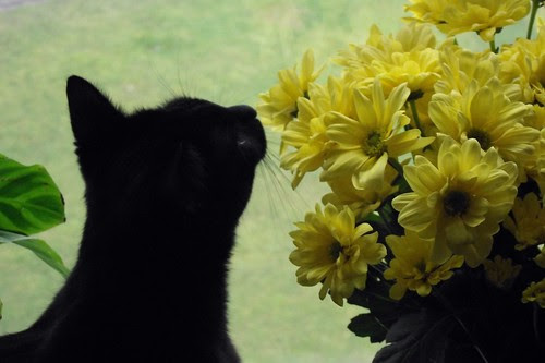 *sniff* the chrysanthemum's by Xbeckie boox