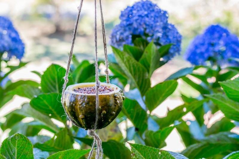 DIY A Natural Bird Feeder