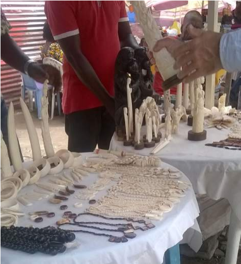 In Central Africa, Chinese have taken control over ivory trafficking,Central Africa, Africa,news,viral news,viral