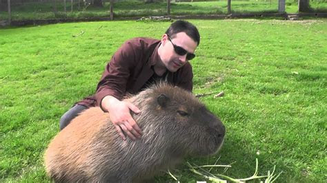 Making Friends with a Capybara   YouTube