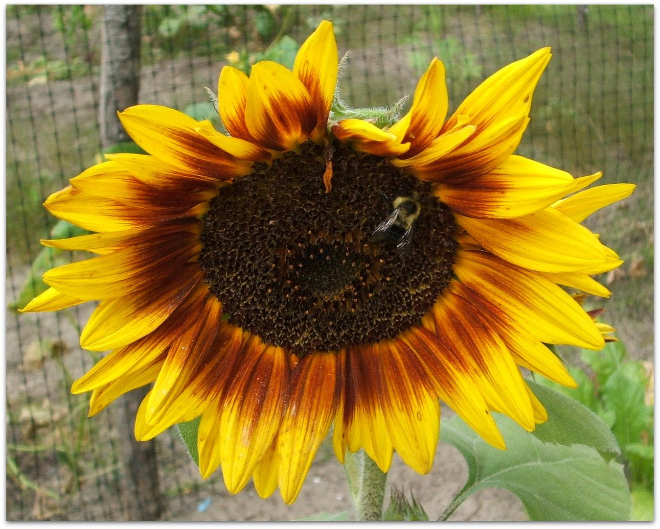 by Angie Ouellette-Tower for http://www.godsgrowinggarden.com/ photo DSCF9069_zpsyxaqyqdl.jpg
