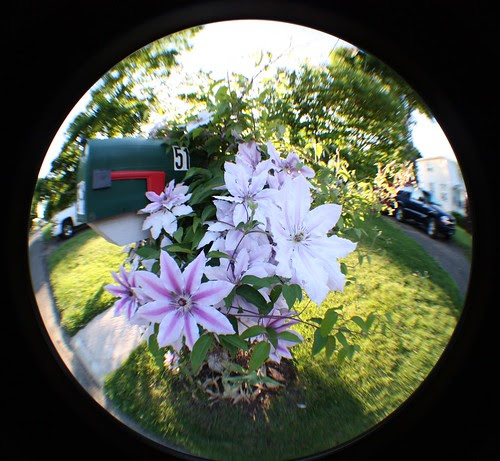 fisheye flowers