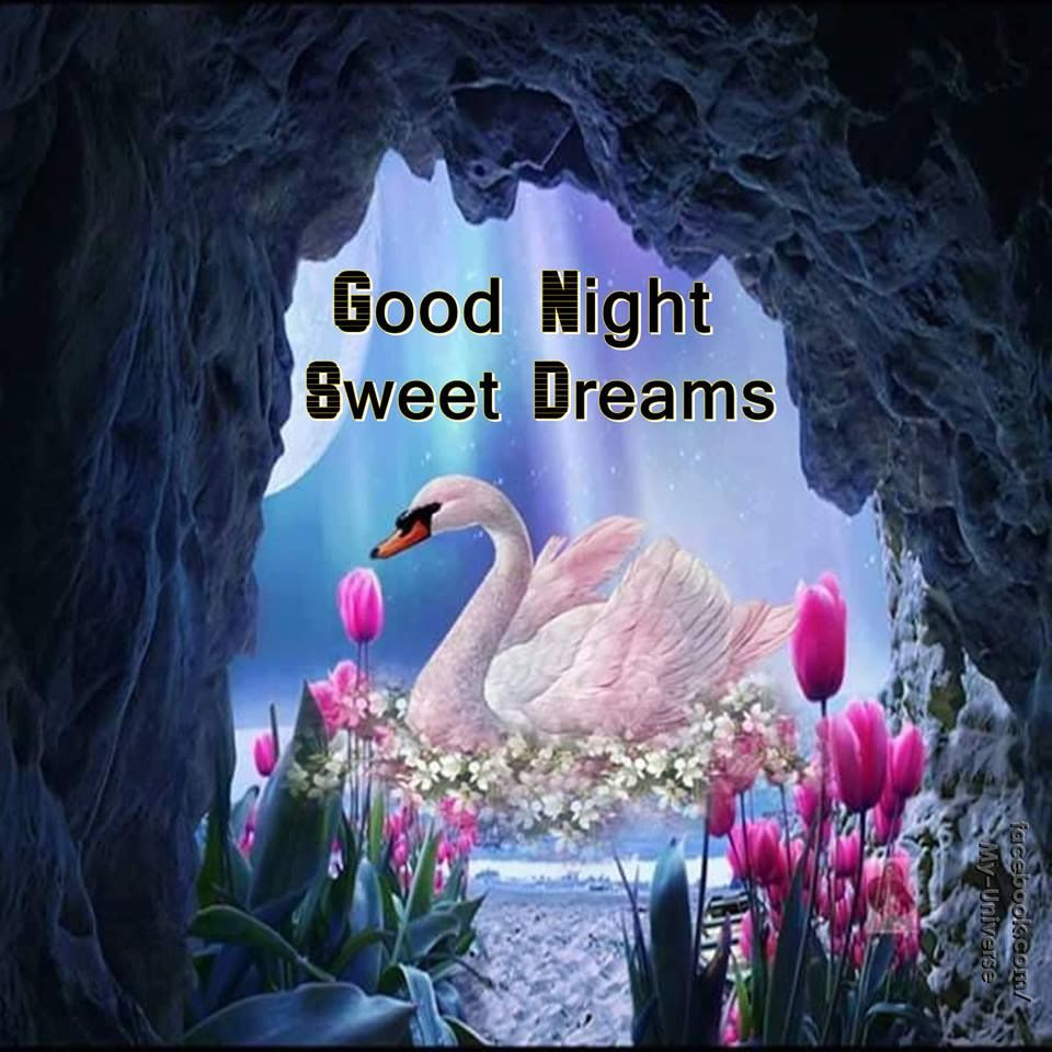 Dove Good Night Sweet Dreams Graphic Pictures Photos And Images