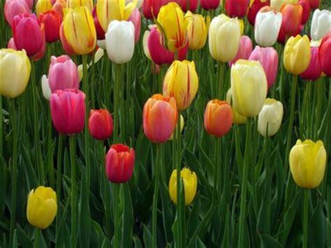 aneka gambar bunga hias cantik gambarbinatangcom