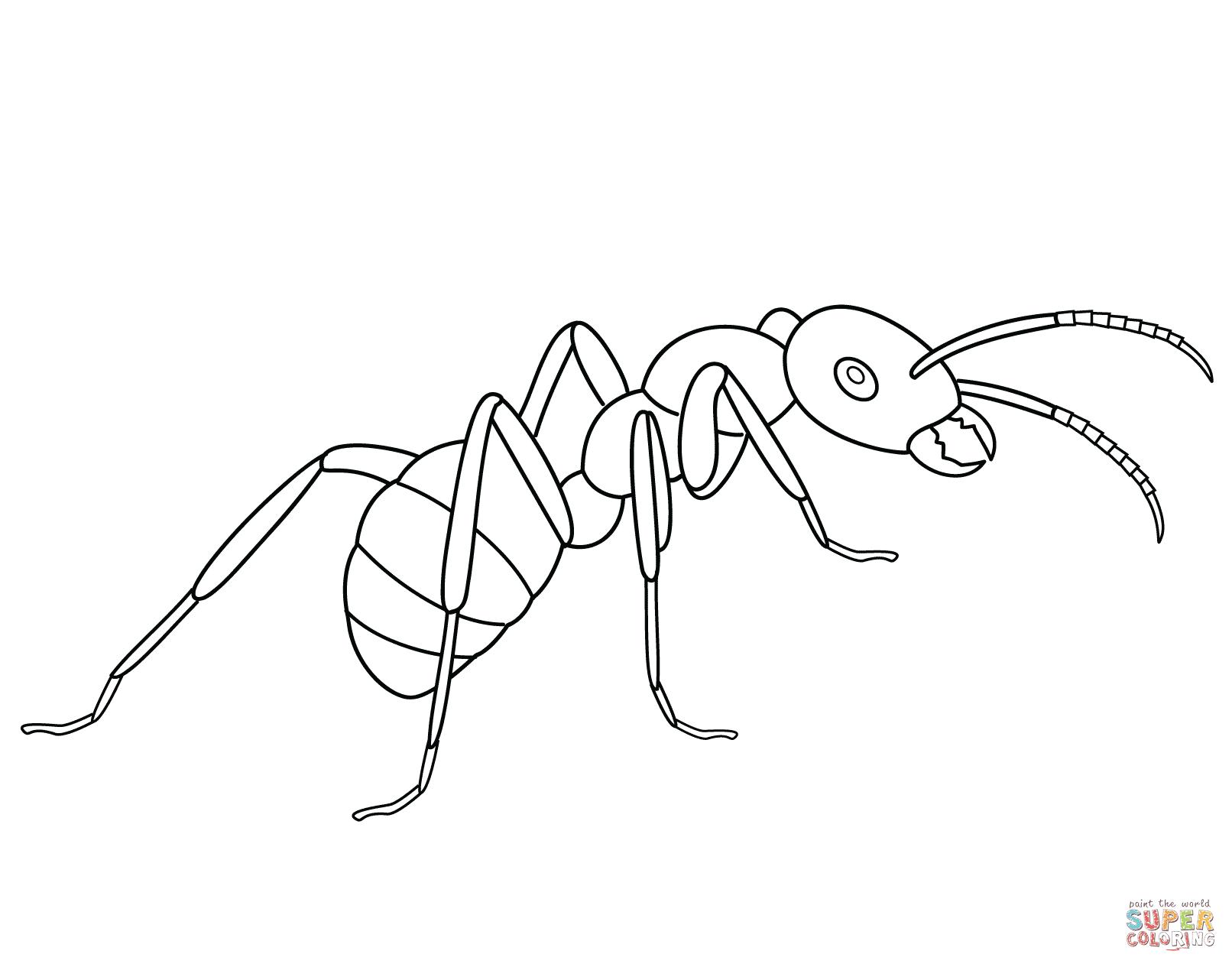 Dibujos De Hormigas Para Colorear Paginas Para Imprimir Y Colorear