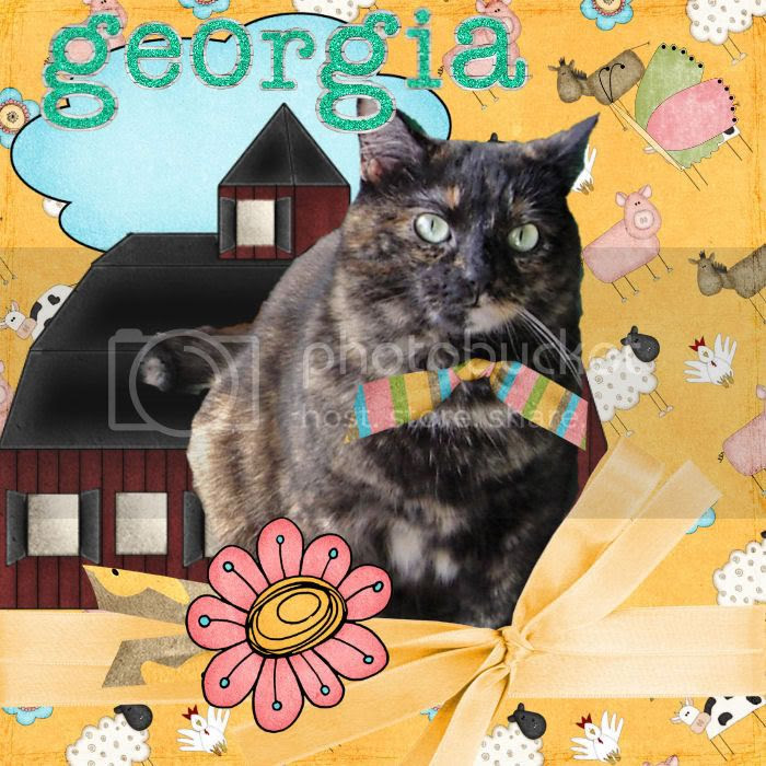 Torti Cat,Country Cats