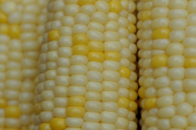 Close up, sweet corn by Eve Fox, Garden of Eating blog