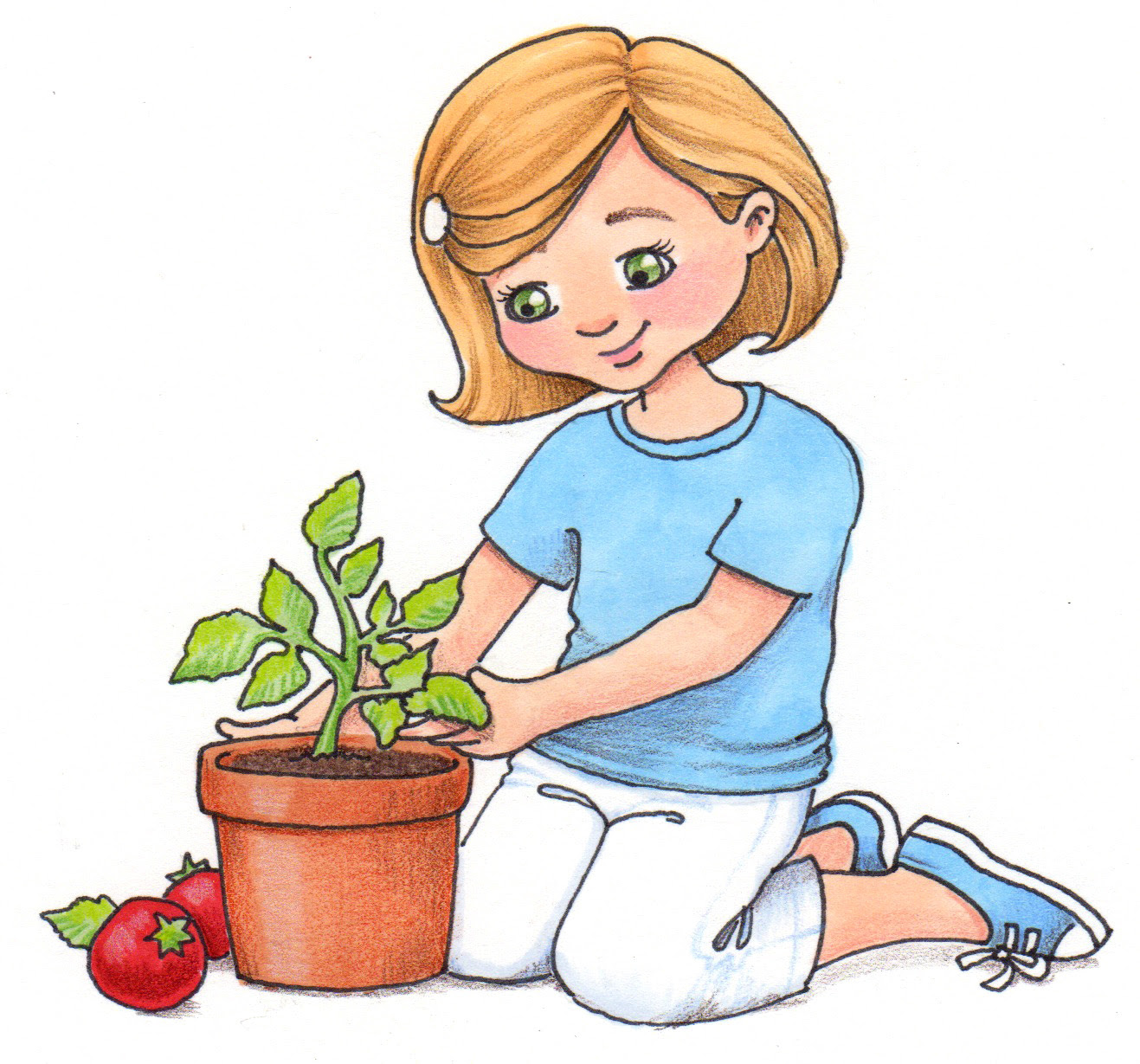 growing plant clipart tomatos