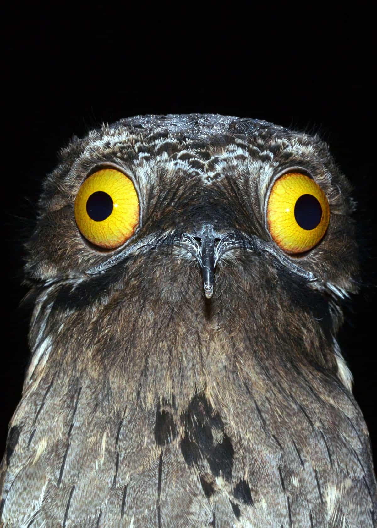Panicked Screaming Bird Meme