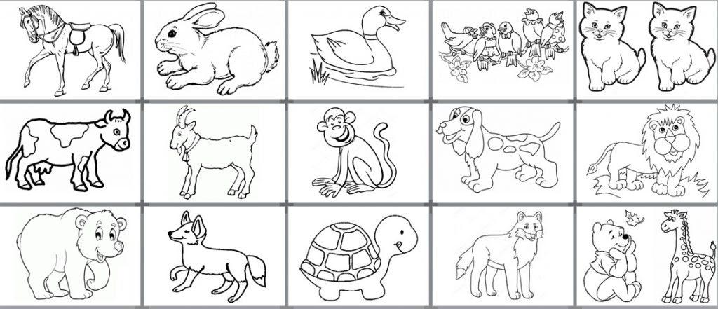 Hayvan Boyama Sayfaları Okul Etkinlikleri Eğitime Yeni Bir Bakış