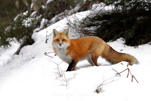 What are you looking at? by Megan Lorenz