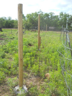 Fence Posts Concreted In