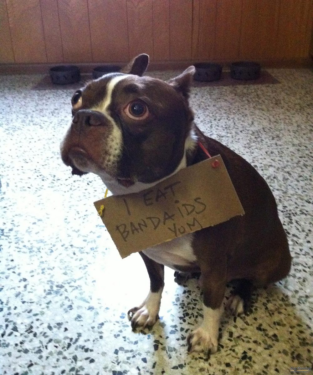 dog shaming 22 32 Hillarious Public Shaming of Dogs