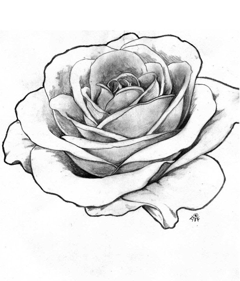 Black And Grey Rose Drawing At Getdrawingscom Free For Personal