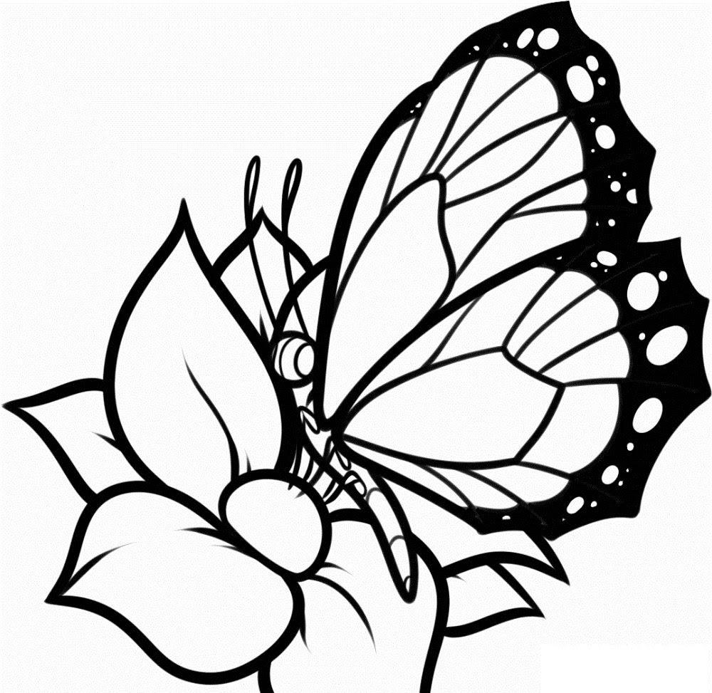Dibujos De Mariposas Y Flores Imágenes Y Fotos