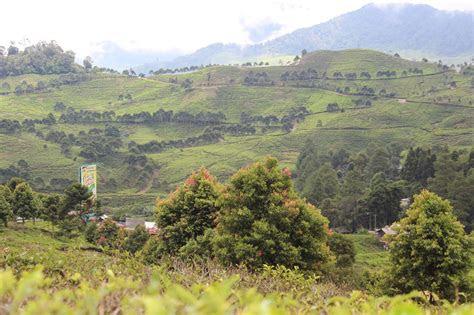 pass puncak bogor objek wisata kebun teh  indah