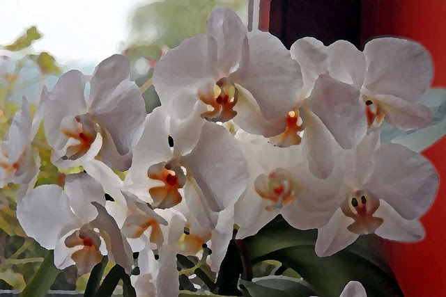 Orquídea pintada