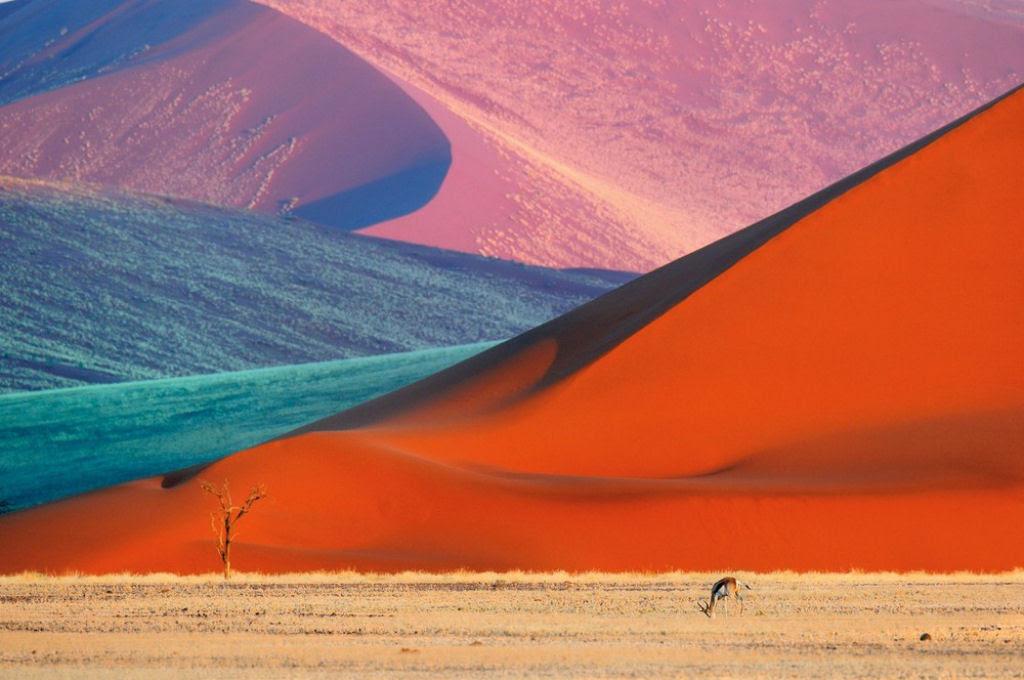O lado colorido da África selvagem por Alex Bernasconi 04